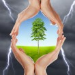 Human hands protecting tree - 