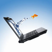Gold fish on notebook screen — Stock Photo