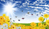 Beautiful flowers against the blue sky — Stock Photo