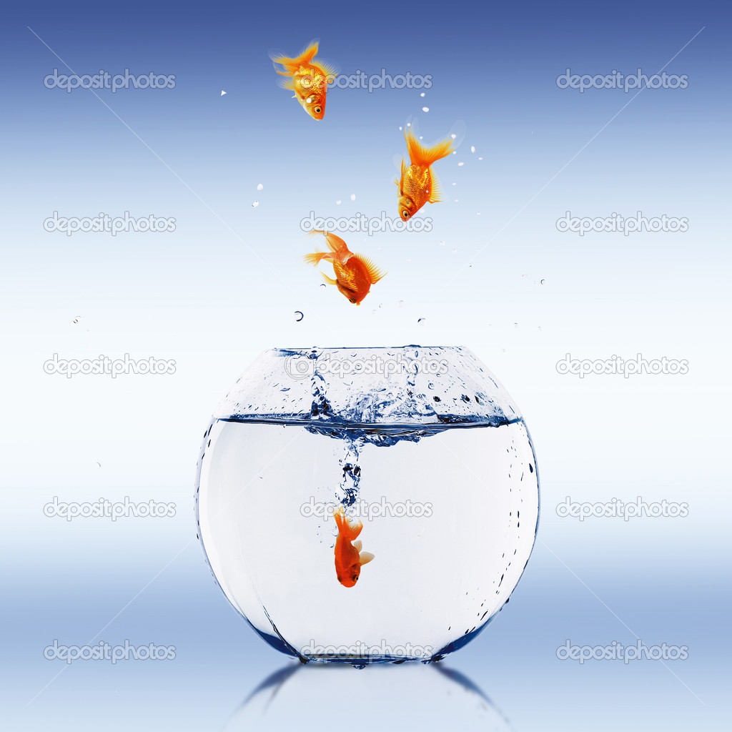 Goldfish bowl without fish for Fish in a bowl