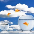 Gold fish together — Stock Photo #5905828