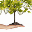 Foto de Stock  : Money Tree