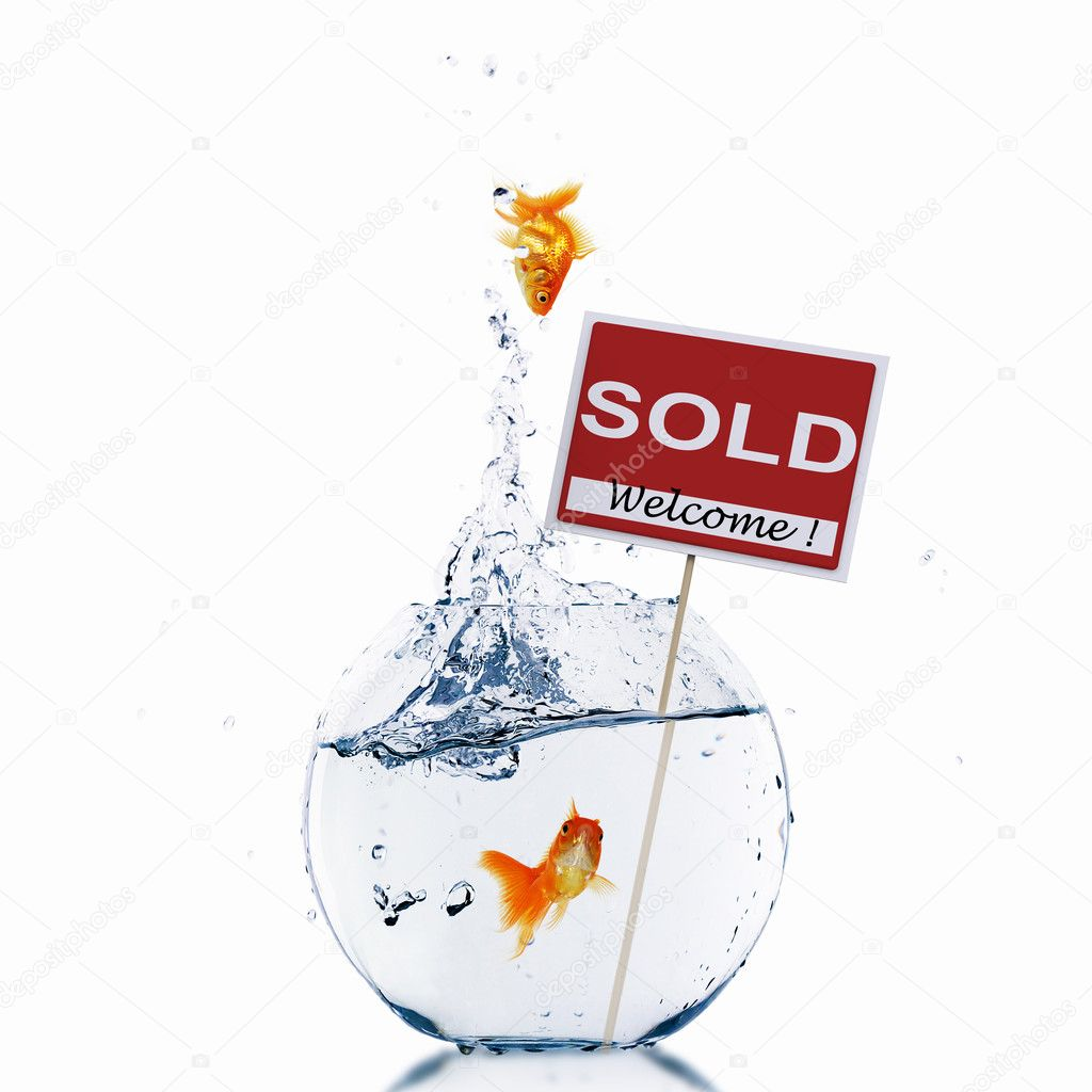 Gold fish in a fishbowl with sign of sale — Stock Photo #5922089