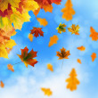 Red and yellow leaves — Stock Photo