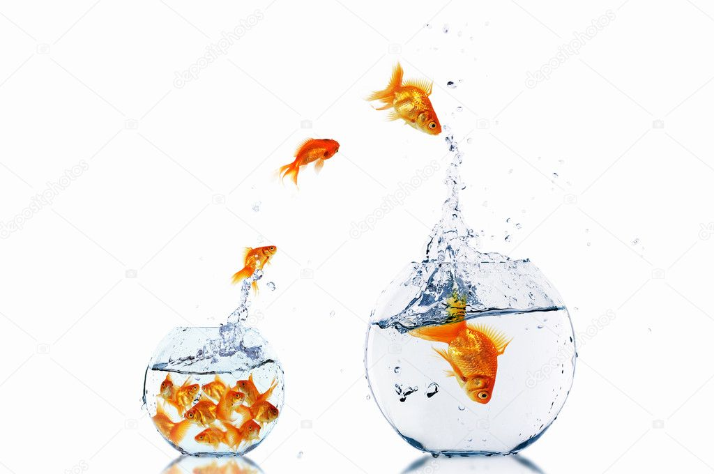 Many gold fish together as symbol of teamwork  Stock Photo #5975007