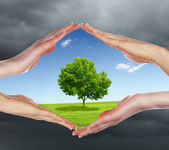 Human hands protecting tree — Foto Stock