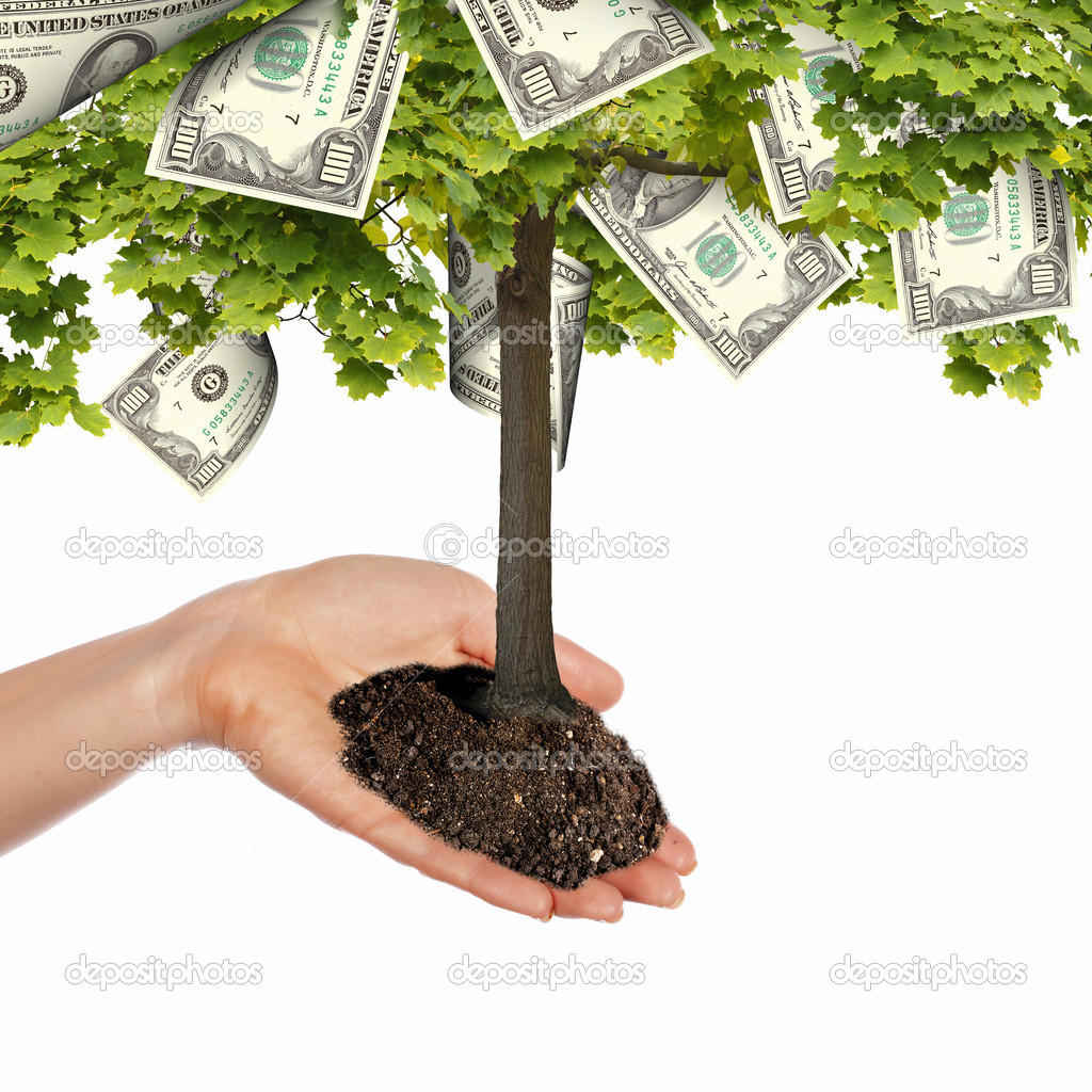 Money Tree — Stock Photo © SergeyNivens #6043286
