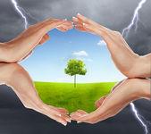 Lidské ruce chrání strom — Stock fotografie