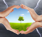 Mains humaines, protégeant l'arbre — Photo
