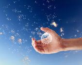 Ludzką ręką trzymając dandelion — Zdjęcie stockowe