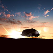 Lonely tree on the horizon — Stock Photo