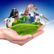 Green world and wildlife protected - Stock Photo