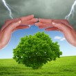 Stock Photo: Humhands protecting tree
