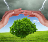Human hands protecting tree — Stock Photo