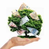 Pengar träd — Stockfoto
