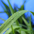 Drop of dew — Stock Photo #6323434