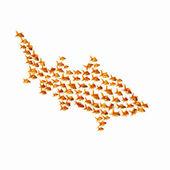 Gold fish together — Стоковое фото