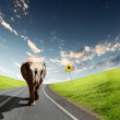 Elephant Bull in walking on a road - Stock Photo