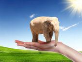 Human hand holding Elephant Bull — Stock Photo