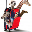 Red suitcase with different exotic animals inside — Stock fotografie