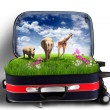 Red suitcase with green nature inside — Stok fotoğraf