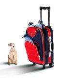 Röda resväska med pinguines inuti — Stockfoto