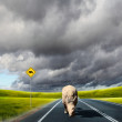 Wild rhino wlaking on a road - Stock Photo