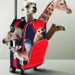 Red suitcase with different exotic animals inside - Stock Photo