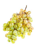 Bunch of ripe grapes — Stock Photo