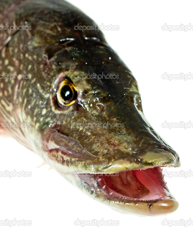 Mouth Pike — Stock Photo © Winston #6262949