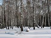 Winter forest. — Stockfoto