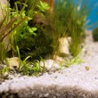 Empty aquarium with plants — Stock Photo