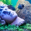 Stok fotoğraf: Ancient statue underwater. Fishes near