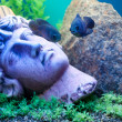 Stockfoto: Ancient statue underwater. Fishes near
