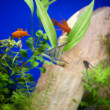 Little fishes in fishtank with plants — Stock Photo