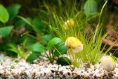 Empty aquarium with plants — Stock Photo