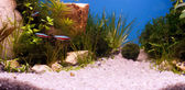 Speedy peixes debaixo d'água — Foto Stock