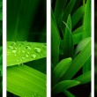 Nature banners — Stock Photo