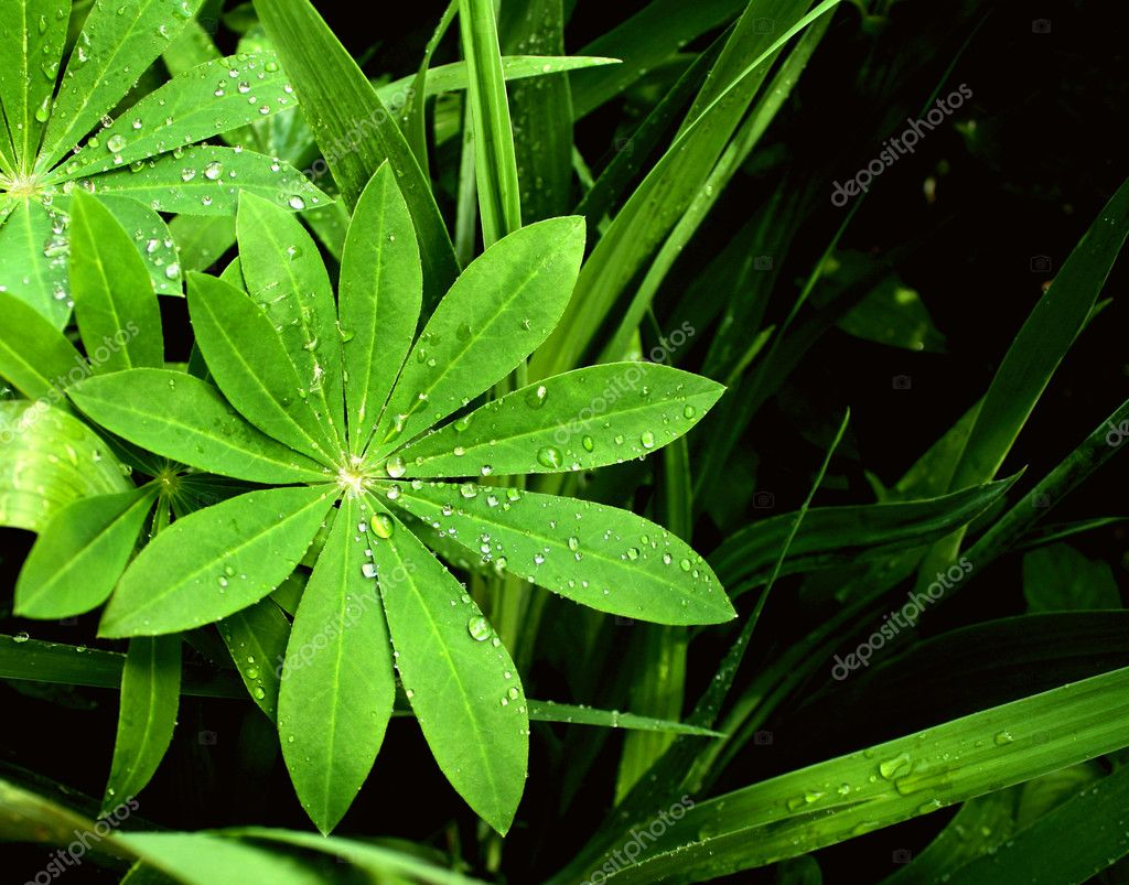 Rain drops on a green leafs — Stock Photo #5895793