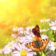 Butterflys - Stock Photo