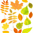 Autumn leafs — Stock Photo #6040002