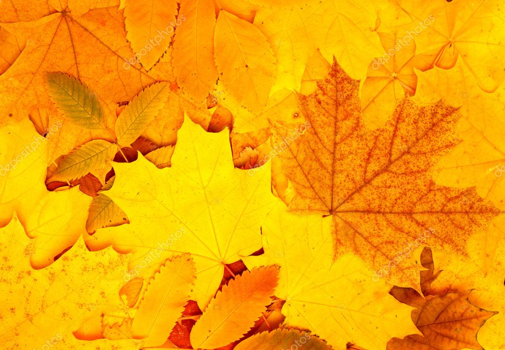 Decorative texture from bright autumn leaves — Stock Photo #6062525