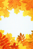 Notebook pages and autumn leaves — Stock Photo