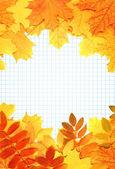 Stránky poznámkového bloku a podzimní listí — Stock fotografie