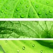 Collection of banners with green leaf texture — Stock Photo #6322027