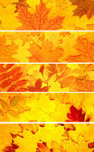 Set of banners with autumn leaves — Stock Photo