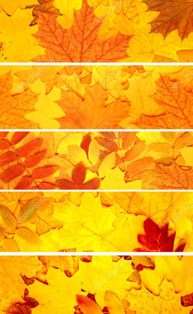 Collection of banners with autumn leaves — Stock Photo #6697289