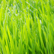 Green lawn — Stock Photo #5417540