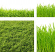 Types of green grass — Stock Photo
