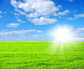 Zelená pole — Stock fotografie